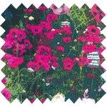 Cotton fabric flowered garden - PPMC