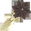 Barrette clic-clac fleur étoile marron
