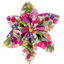 Star flower 4 hairslide purple meadow