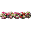 Japan flower hair slide-large size purple meadow - PPMC