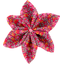 Star flower 4 hairslide currant crocus - PPMC